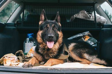 pets driving safety
